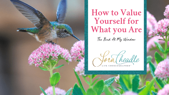 Lessons from the bird at my window on How to Value Yourself